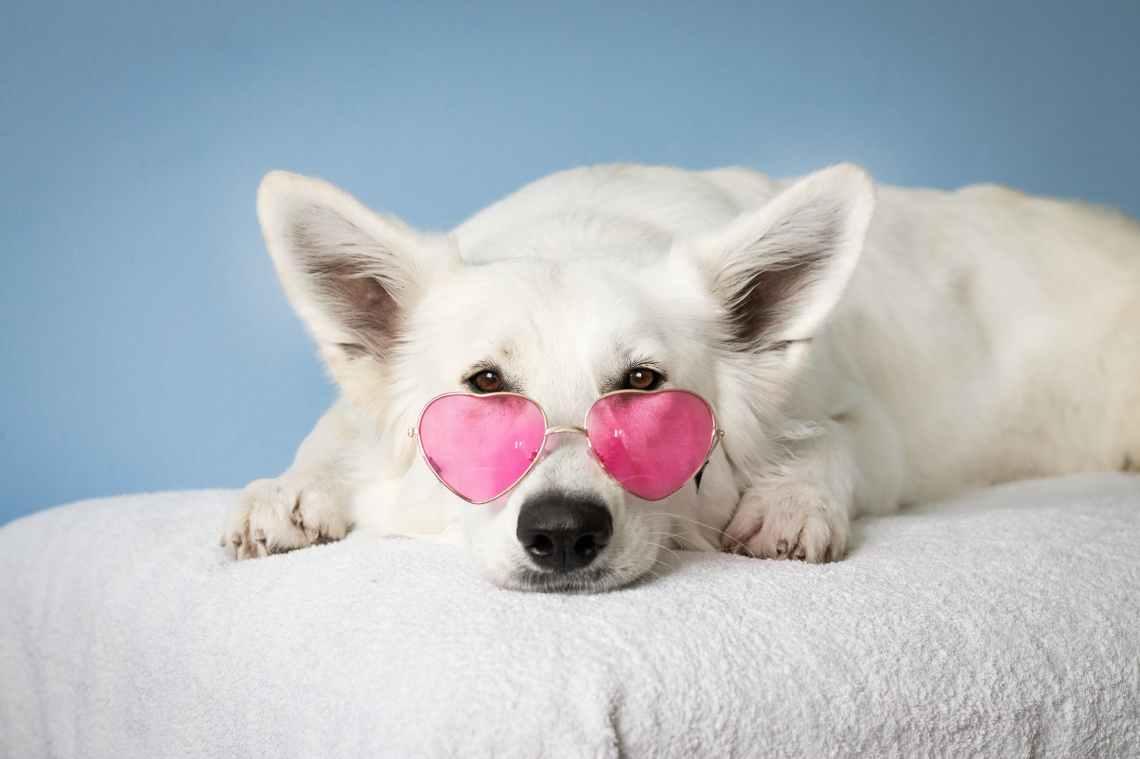 medium short coated white dog on white textile