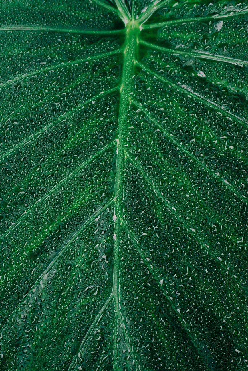 close up photography of dewdrops on leaf